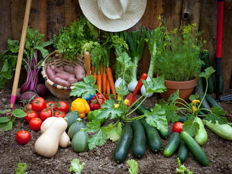 Der gesunde Ertrag